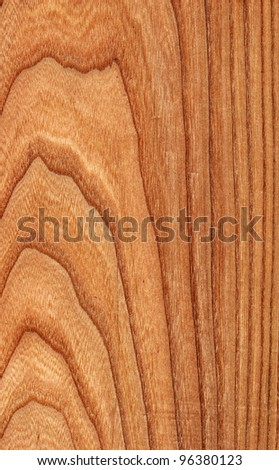 Texture of elm (high-detailed wood texture series)