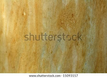 texture of Eucalyptus wood surface - stock photo