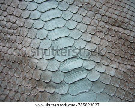 Texture of exotic skin. leather snake. Python.