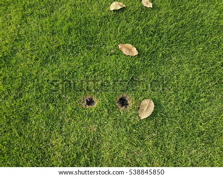 Texture of fresh green grass used for background