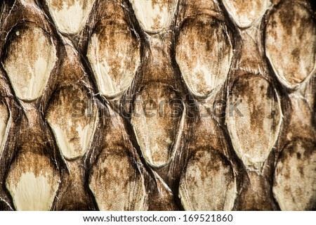 Texture of genuine snakeskin. Close up real leather texture - stock photo