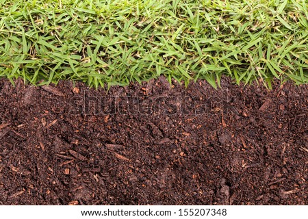 Texture of grass and soil - stock photo