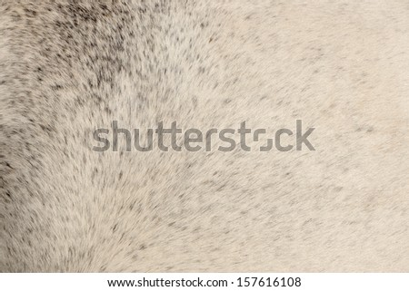 Texture of gray fur from a short hair horse - stock photo