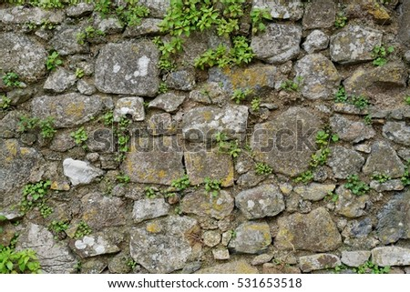 Texture of gray stone wall covered with lichen and plants