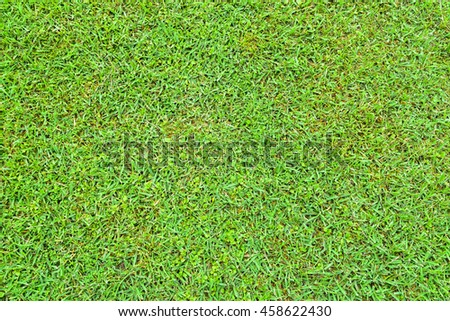 Texture of Green Grass - stock photo