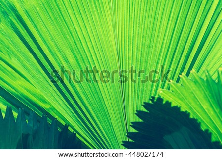 Texture of green leaf. Abstract nature background. - stock photo