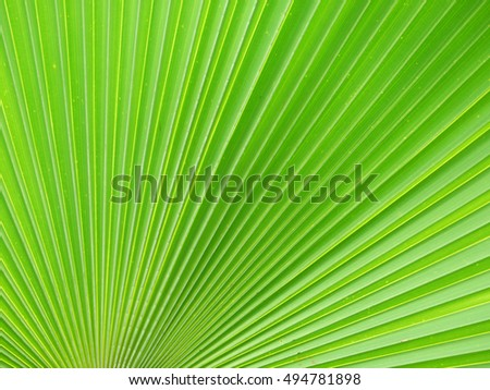 Texture of Green palm Leaf background
