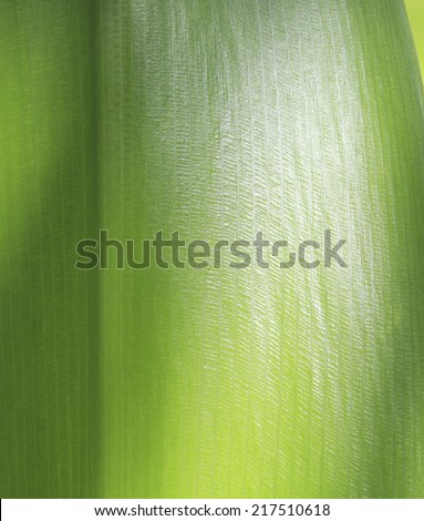texture of leaf - stock photo