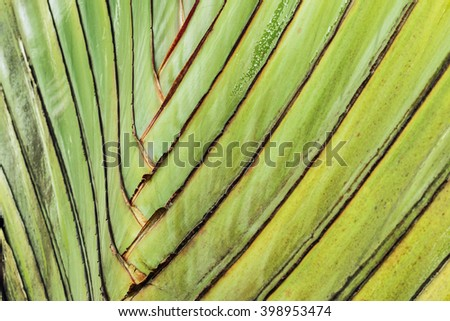 Texture of leaf stalk of  palm  used as background