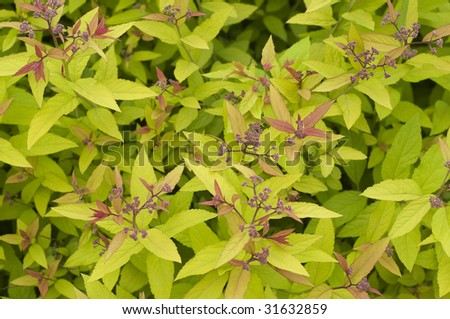 texture of leaves and flowers