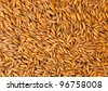 Texture of oats seeds - stock photo