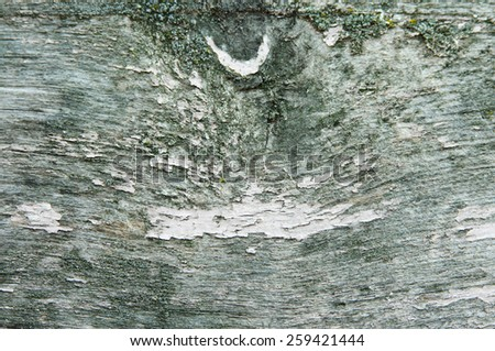 Texture of old green bark wood - stock photo