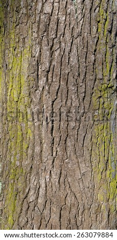 Texture of old tree bark covered with green moss - stock photo