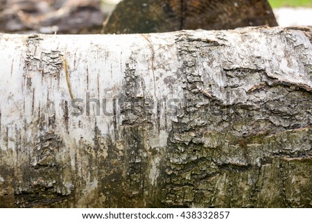 Texture of old wood in the forest background