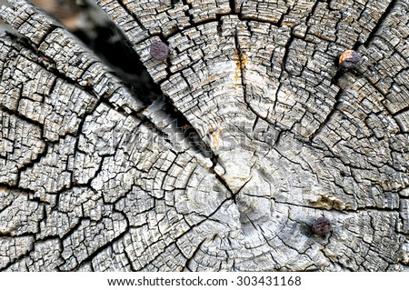 Texture of old wood structure.  - stock photo