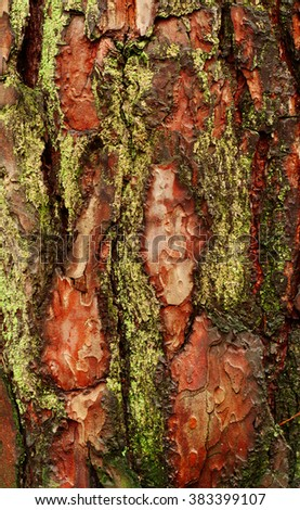 texture of old wood with bark with of moss and colorful pattern