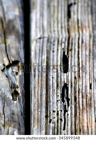 Texture of old wood with many termites holes.