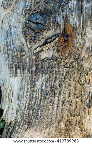 texture of old wooden