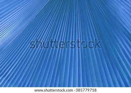 Texture of palm leaf in blue - stock photo