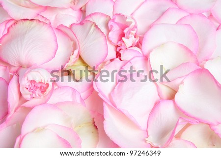 Texture of pink rose's petals, pastel colors - stock photo