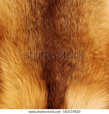 Texture of red fox fur - stock photo