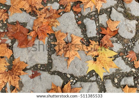 Texture of road paved with stones and bright autumn leaves in Zemun,Belgrade,Serbia.