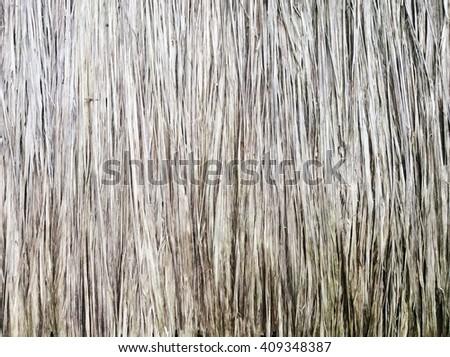 texture of Thatched from Imperata cylindrica Thailand