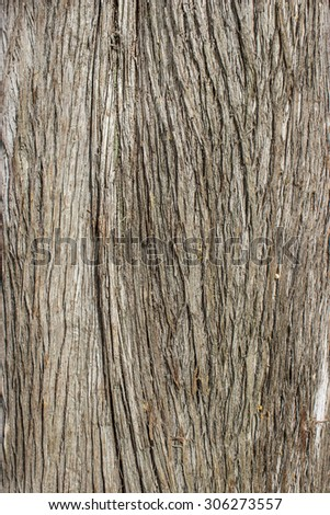 Texture of the bark of a tree / bark / background