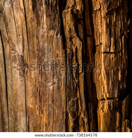 Texture of the old rotten wood