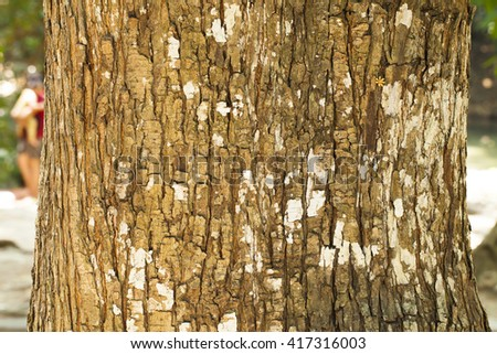 Texture of the tree in national park.