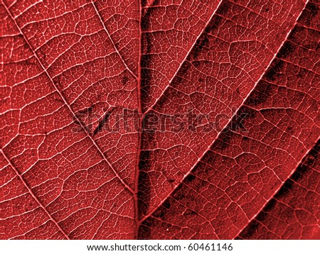 texture of the wood sheet - stock photo