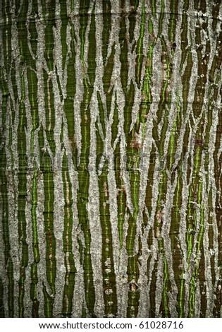 texture of tree bark - stock photo