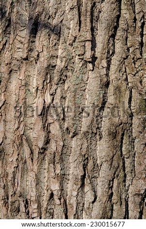 texture of tree bark closeup, abstract background