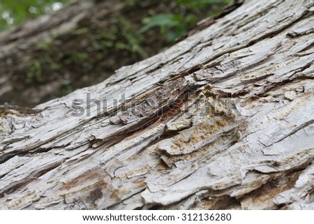 texture of  tree's bark background