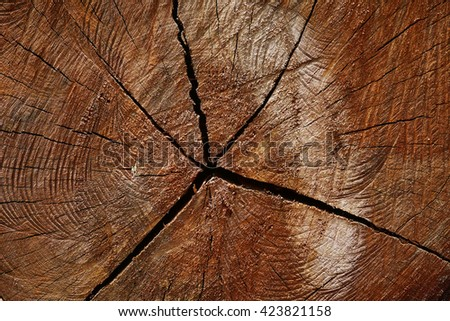 texture of tree stump - stock photo
