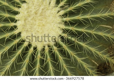 Texture on Cactus - stock photo