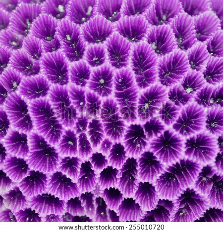 Texture or background formed by the detail of purple coral - stock photo