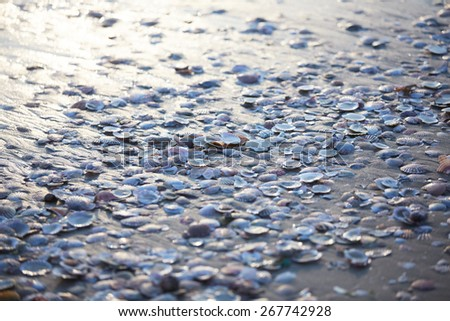 texture set of mollusk shells, mussels on the shore with sunlight reflected off the wet sand - stock photo