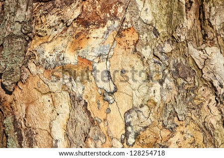 Texture shot of brown old tree bark - stock photo