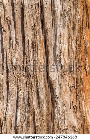 Texture shot of brown tree bark - stock photo
