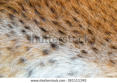 Texture spotted wild animal fur . Wild forest lynx  - stock photo