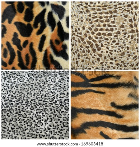 Texture wild animal africa assembly - stock photo