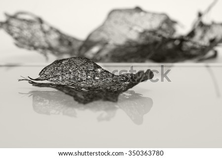 Texture with rotten leaves with fibers - black and white composition