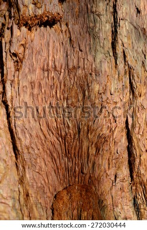 Textured background of a old growth Sequoia tree. - stock photo