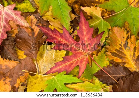 textured background with falling leaves - stock photo
