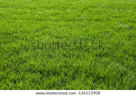 textured background with green grass - stock photo
