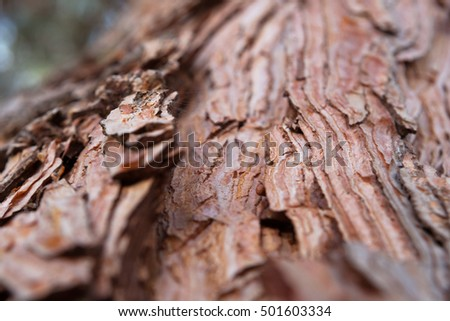 textured bark of a tree for the background