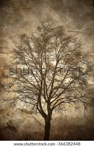 Textured birch tree silhouette in dusk light. - stock photo