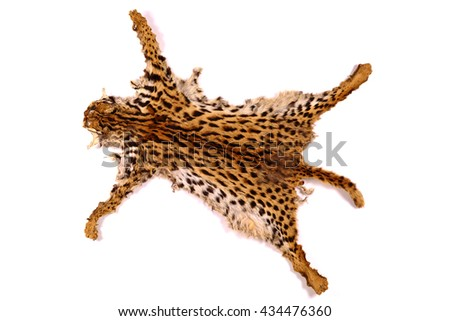 textured detail   leather  or fur asian goldden cat or Temminck's cat  on white background (original leather uncut or edit)  - stock photo
