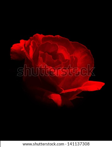 textured grunge background with red rose over black - stock photo